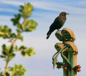 MB Bird on Pole Adjusted