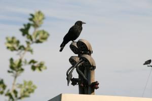 MB Bird on Pole
