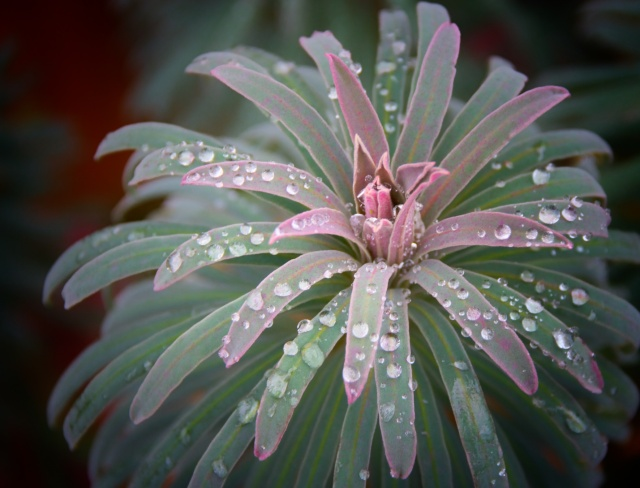 Raindrop Beauty