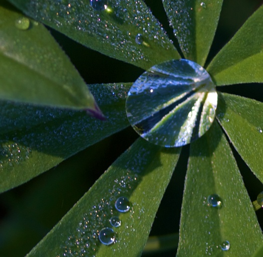 Water drop - the photo that  generated the comment about my good eye.