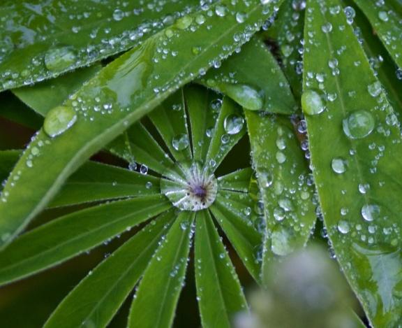 Spring Brings Rain
