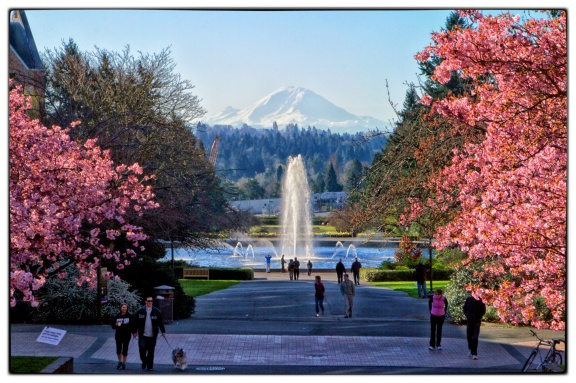 Spring Arrives in Seattle