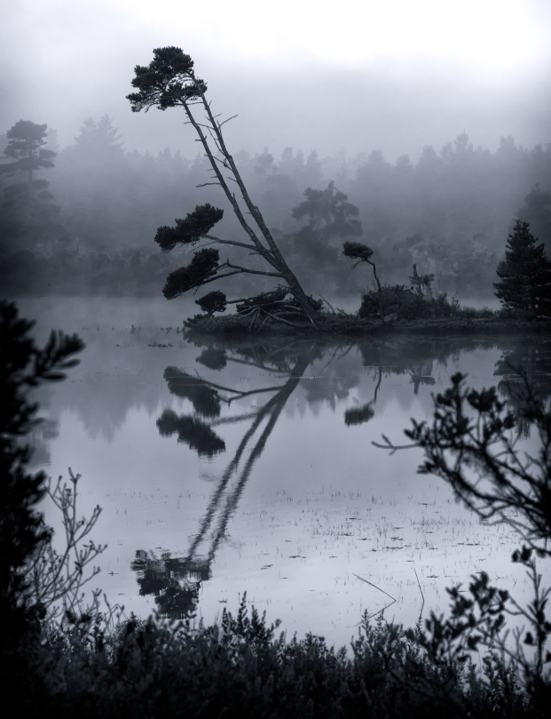 Early Morning Lake Reflections, Florence, Oregon