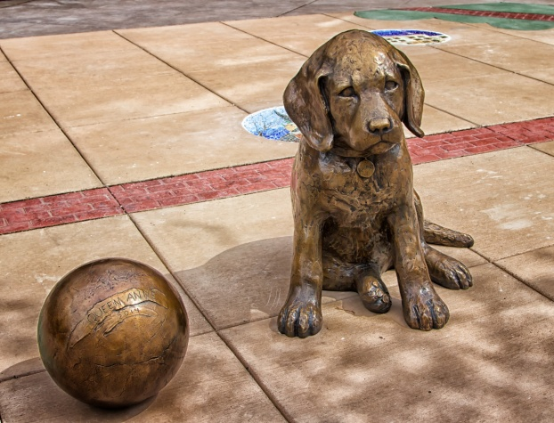 Queen Anne Neighborhood Dog