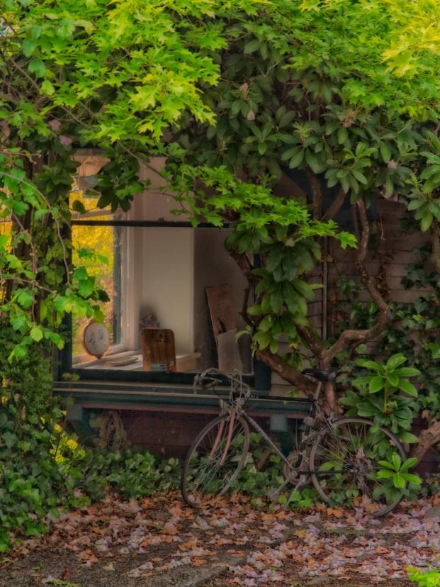 Window in the Neighborhood