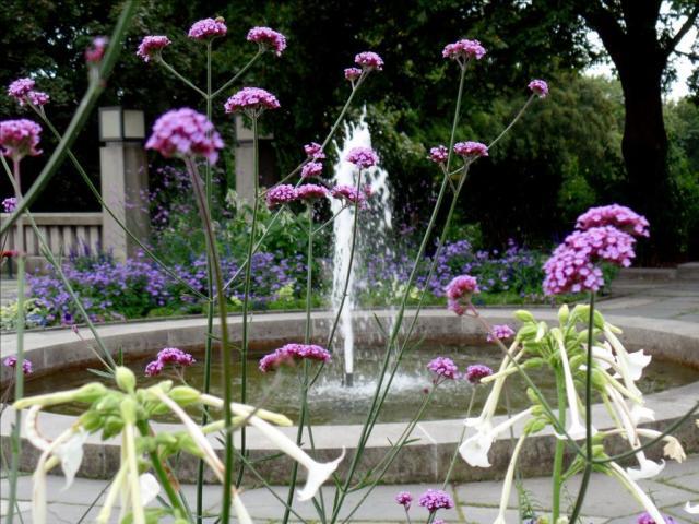 Fountain Flowers in Oslo