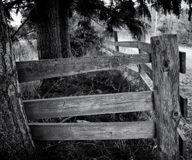 Whidbey Island Fence