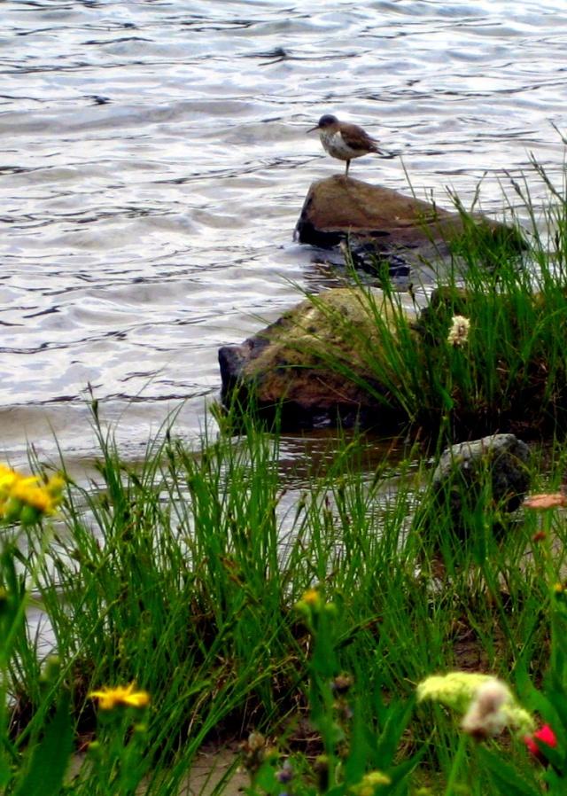 bird mt flowers rock