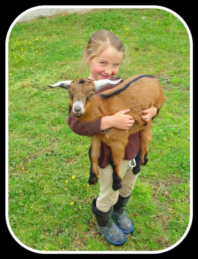 One goat
