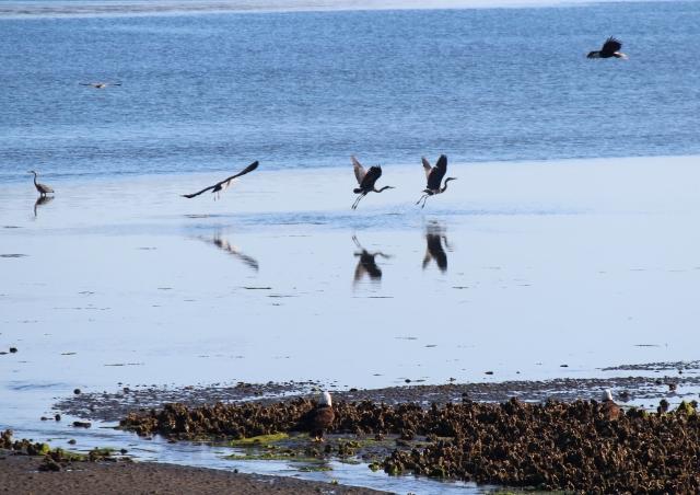 Cranes and Eagles