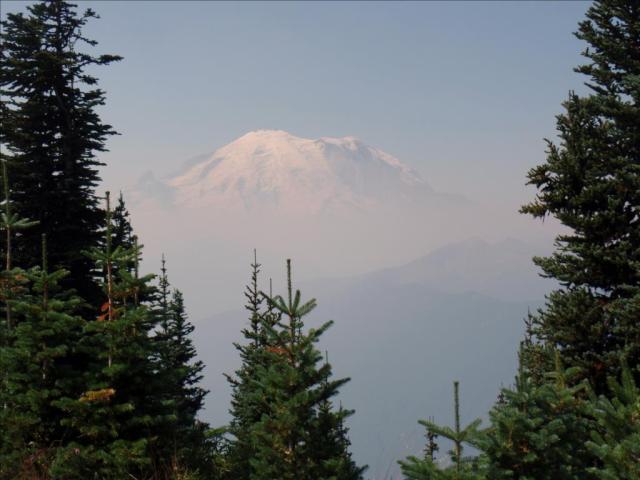 Mt Rainier w trees